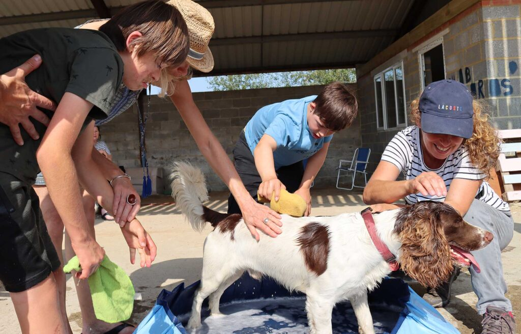 outdoor-activities-dog-washing