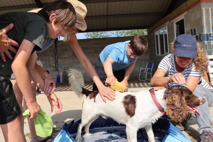 outdoor-activities-dog-washing